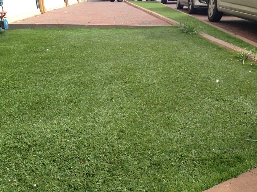 ברצינות שטיחי דשא סינטטי במראה רענן ומחיר זול, חיתוך לפי מידה – הום דקור RB-47
